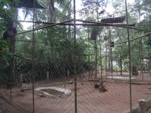 Em visita recente, o Sudoeste Hoje constatou o desaparecimento de mais da metade dos animais da Matinha.