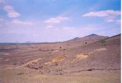 Pastagens secas dão à região de pecuária aspecto de caatinga